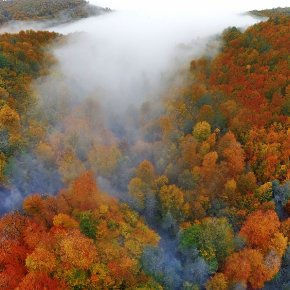 fall of iran forests